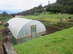 Plantation House Gardens