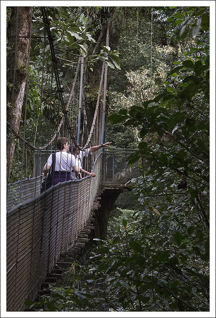 Tenorio Rain Forest 2015-02-10 6