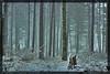Winter in Pratomagno - Toscana