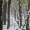 Por los bosques del Quetropillán