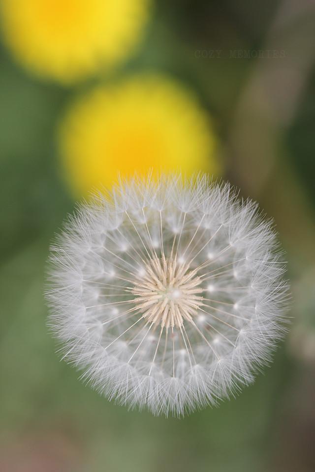 seeds of imagination