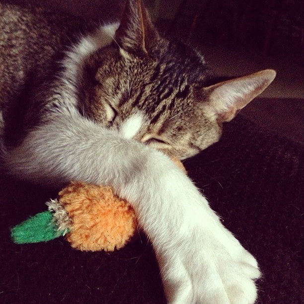 Day 8 #fmsphotoaday #shapes He's got the cutest shape. And his carrot does, too! #furbaby #catsofinstagram #cats
