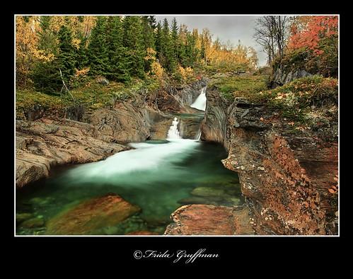 autumn trees mountains green fall nature water colors creek forest landscape waterfall woods stream sweden turquoise north cliffs clear highland fjällen hemavan västerbotten syter