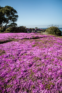 coastline in bloom