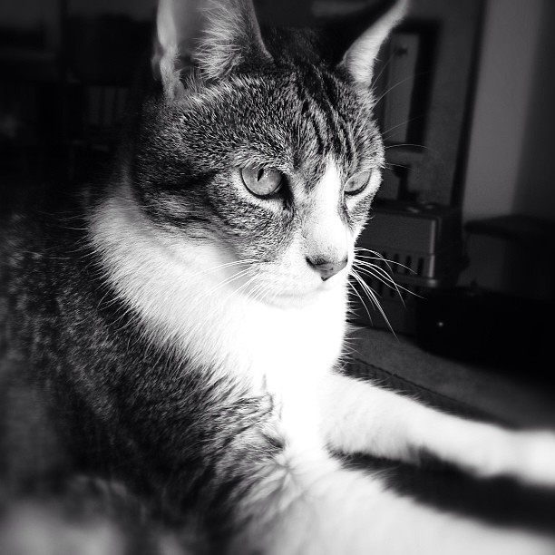 My beautiful boy. #cats #catsofinstagram #furbaby #snapseed