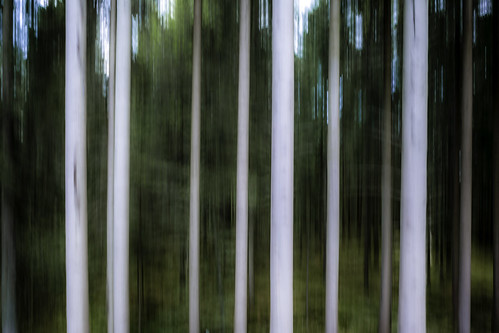 trees abstract forest göteborg landscape photography photo woods europe photographer image fav50 sweden gothenburg may fav20 explore photograph f22 100 sverige 24mm scandinavia fav30 panning fineartphotography goteborg kungsbacka halland tiltshift architecturalphotography västragötaland commercialphotography fav10 explored 2013 fav40 architecturephotography 05sec tse24mmf35l houstonphotographer eos5dmarkiii mabrycampbell may272013 201305270h6a2442