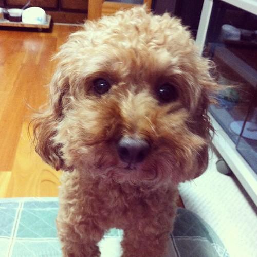 Momo #dog