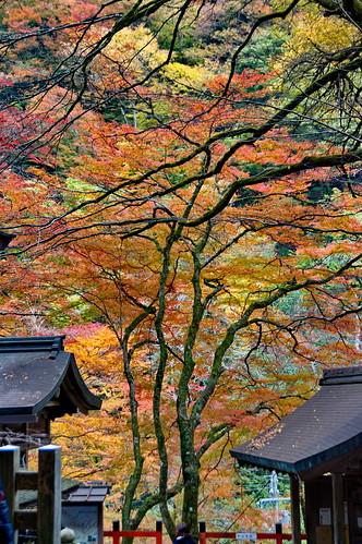 【写真】2012 紅葉 : 貴船神社/2019-02-06/IMGP5938