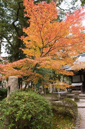 【写真】2012 紅葉 : 醍醐寺/2020-08-07/IMGP6851