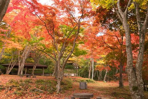 【写真】2012 紅葉 : 笠置山もみじ公園/2020-05-28/IMGP6137