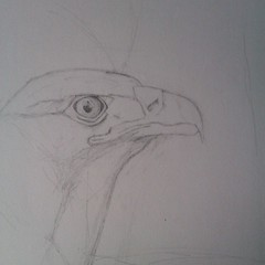 Start of new drawing :-)