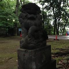 狛犬探訪 赤坂氷川神社 阿吽とも子連れ