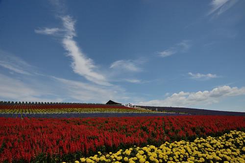 Kanno Farm, Furano, Hokkaido, Japan