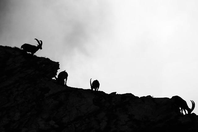 Alps 2013_1 1105_2