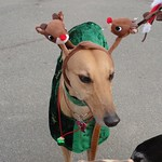 12-04-11 Jingle Bell Walk