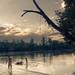 swim in the river / petite baignade dans l'Ain ©olivier.jeannin