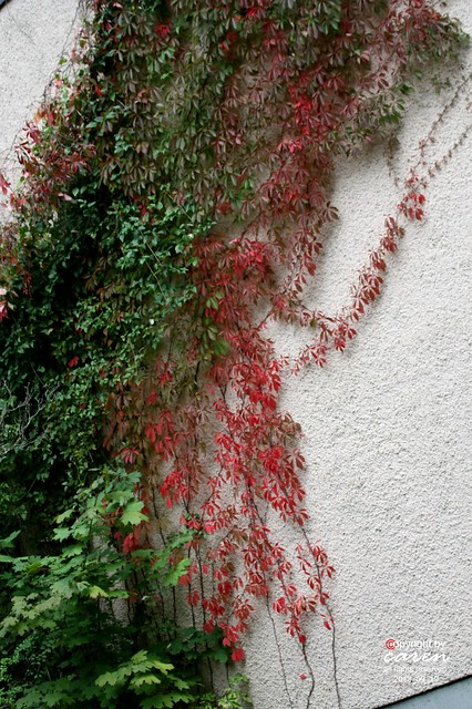Herbstliche Impressionen 2013_09_19 455