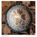 Cap, Shaggy Mane (Coprinus comatus)