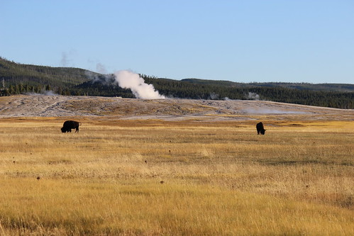 IMG_2143_Buffalo_&_Steam_Yellowstone_NP
