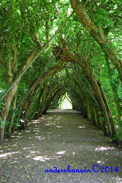 1_Hedge