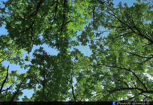 Árvores na Pedra Bolideira