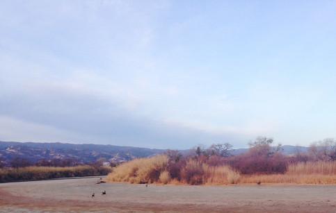 Dry Landscape 3