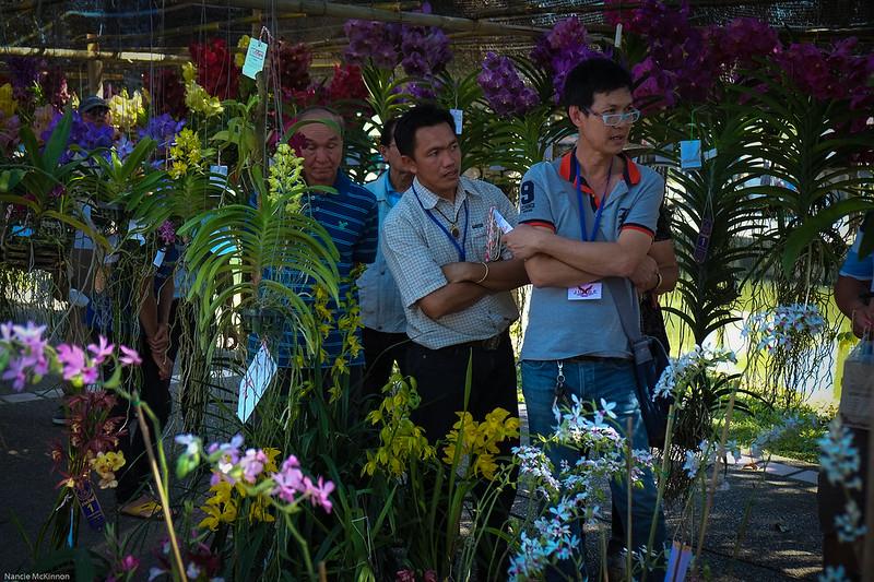 Flower Judging, Chiang Mai Flower Festival 2014