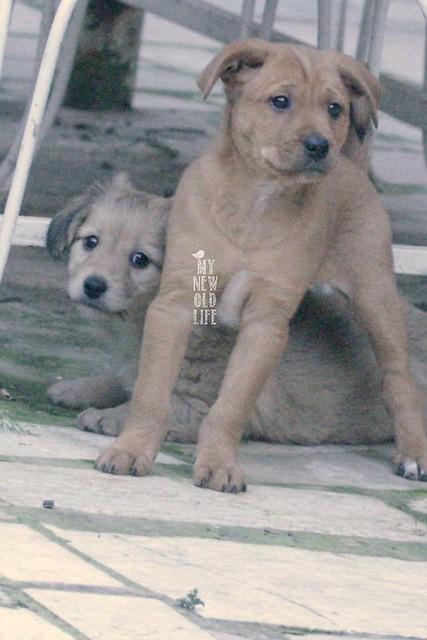 Tyson&Somkey