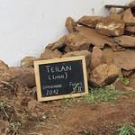 Teilán (Lugo)