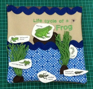 Page 2 - Life cycle of a frog