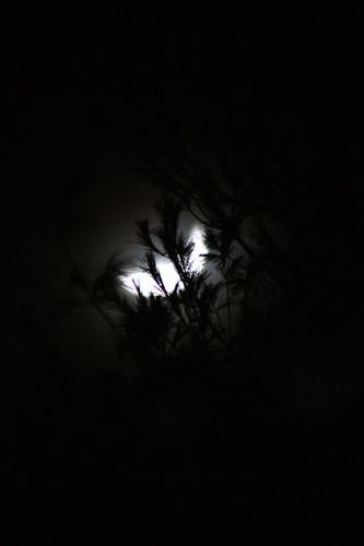 [339/365] Hello, Moon