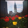 Love Park - gorgeous at tulip time #philly