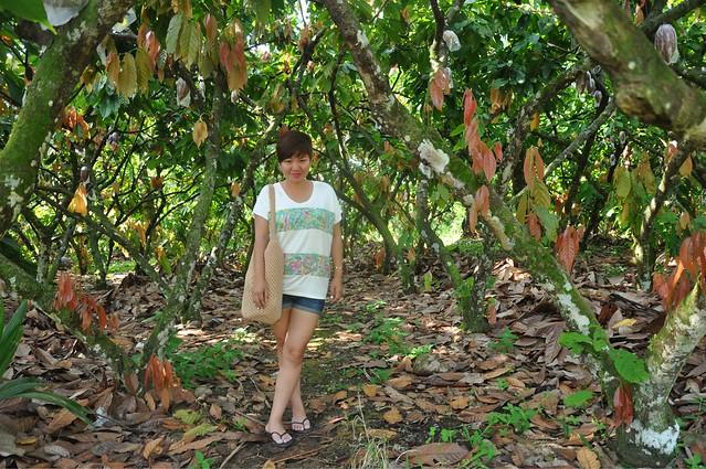 Malagos Farms Cacao Trees