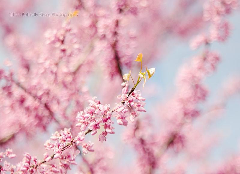 flowers-0991 web