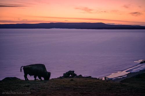 Yellowstone NP #2 - Nikon D800E & AiS 2,8/55mm Micro