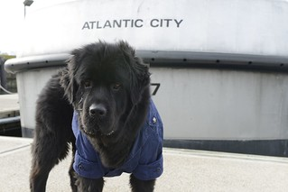 Nucklas, Coast Guard Station Atlantic City's mascot, stands in front of a 47-foot Motor Life Boat at Coast Guard Station Atlantic City, N.J., Tuesday, January 2015. Nucky is the station's mascot who reported to Coast Guard Atlantic City May 14, 2014. (U.S. Coast Guard Photo by Petty Officer David Micallef)