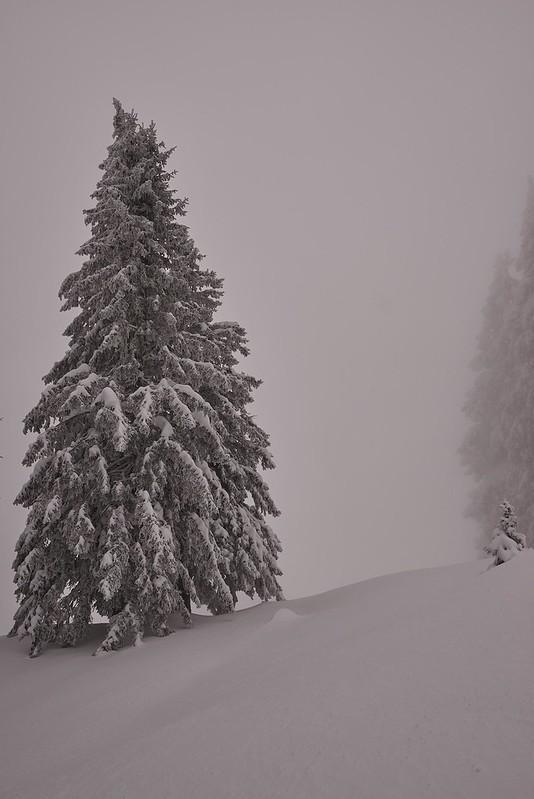 Tree in the fog - Gurnigel
