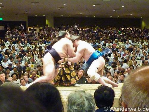 sumo (2 von 5)