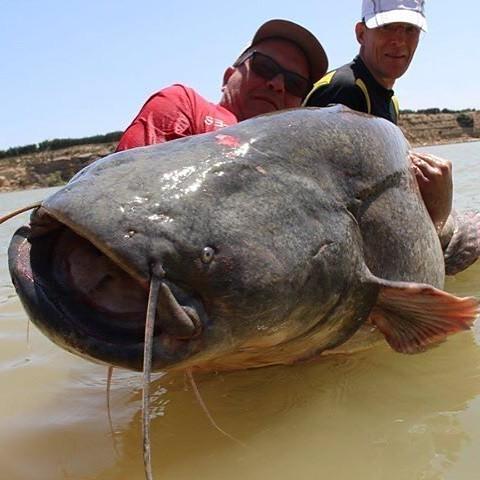 Друг мужа сейчас поймал в Испании рыбку однако #рыба #spain