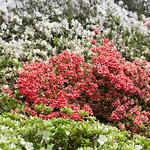 Garden at NYBG