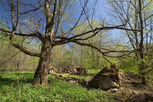 nature spring ruins loodus kevad varemed kohtru