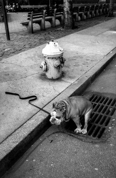 Jill Freedman, Courteous Canine, New York City, 1986