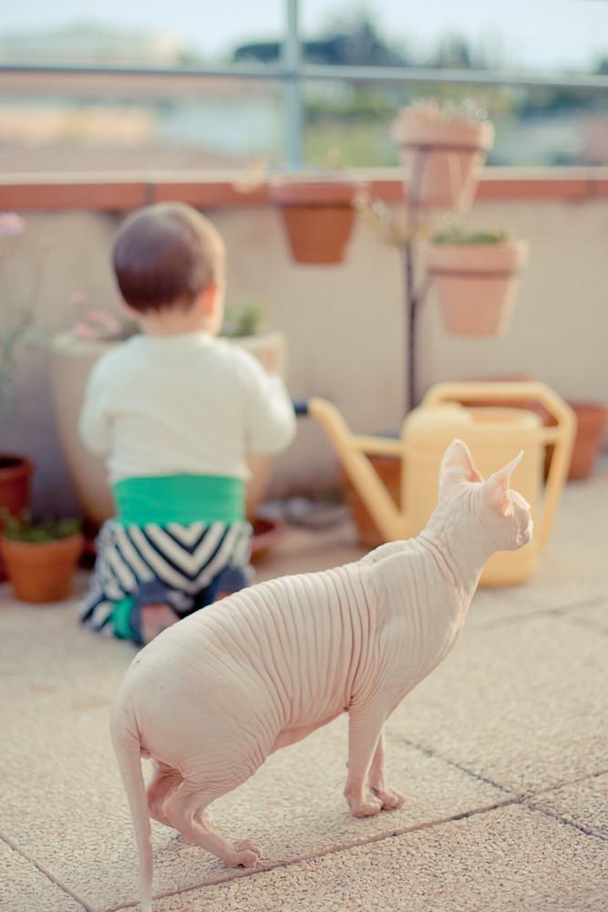 bébé sur terrasse et sphynx