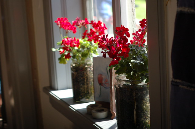 Red Geraniums, Eskilstuna