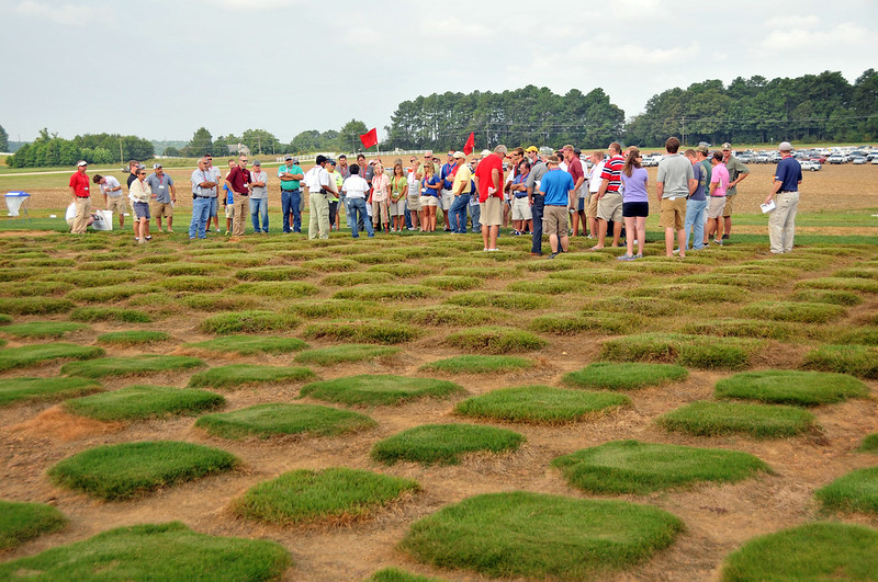 Turfgrass Field Day attendees listen as NC State faculty speak on grass breeding.