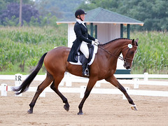Colleen and Covert Rights, Dressage, Richland Park CIC***, photo courtesy of Jenni Autry