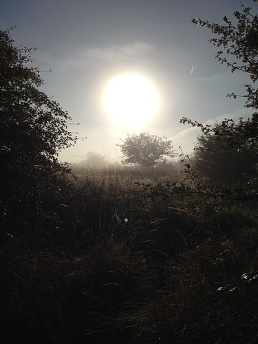 Sunrise over Epping Forest