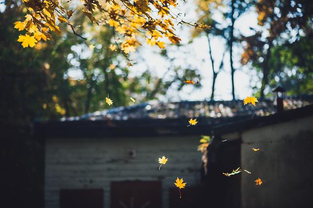 Leaves #286/365 [Explored]