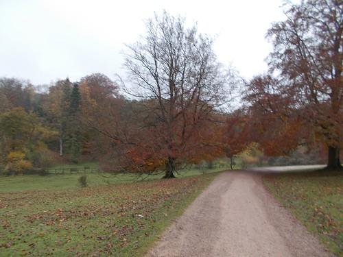 Westonbirt arboretum visit