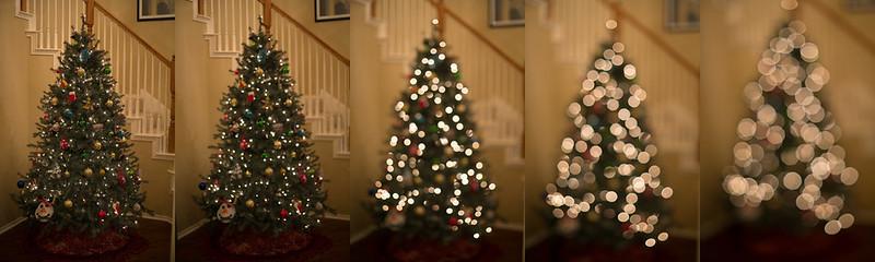 treelightsSB1